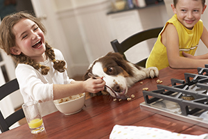 Young girl feeding dog breakfast cereal at kitchen table, laughing