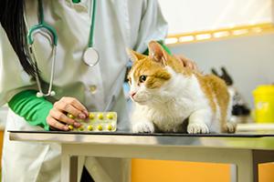 Orange kitten on vet table, veterinarian holding medicine