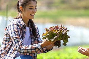 Woman harvesting lettuce on sunny day.