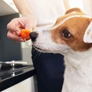 Dog sniffing carrot in woman's hand.