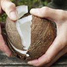 Male splitting open coconut with both hands.